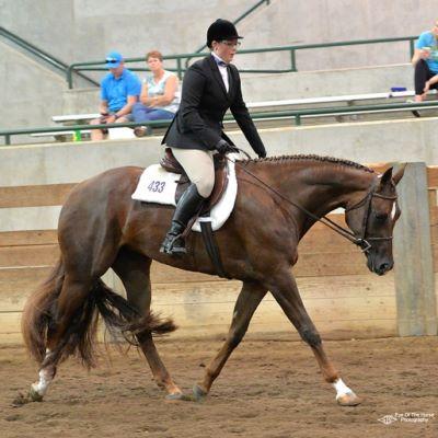 I'm a competitive equestrian